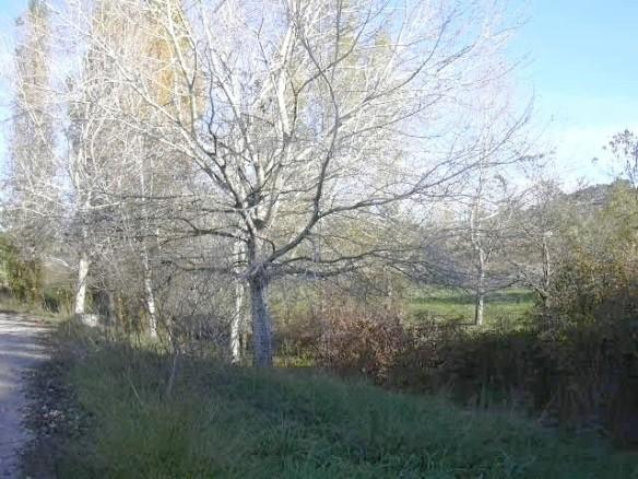 Vista 6