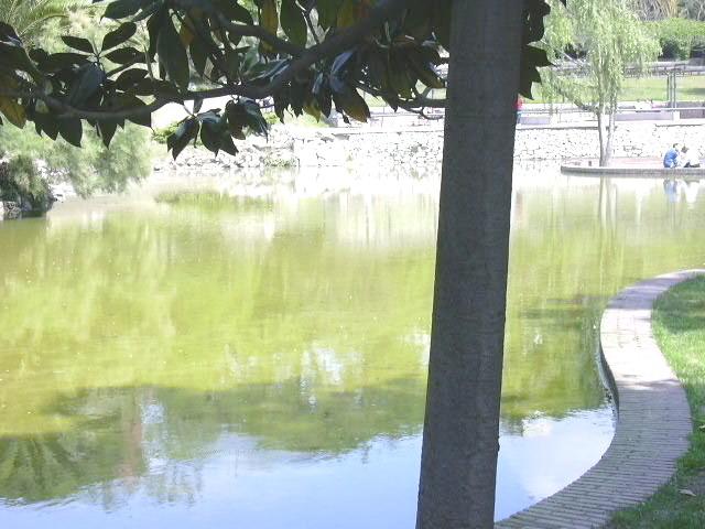 Can mercader fonts naturals aigua muntanya i m s for Piscina can mercader
