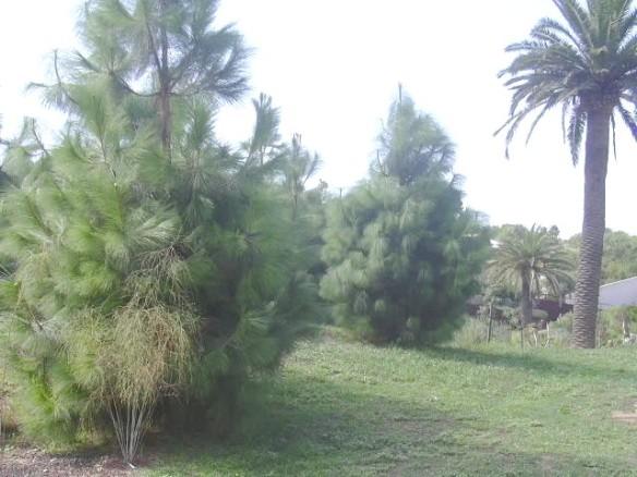Vista 13