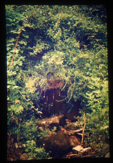 Mina - Font de Marcel.li - any 1986