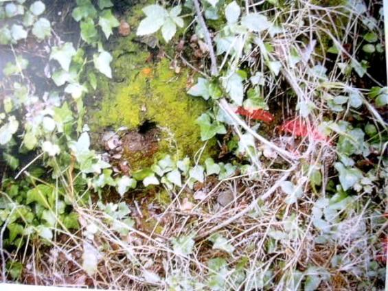 Can balasc fonts naturals aigua muntanya i m s - Can font les franqueses ...