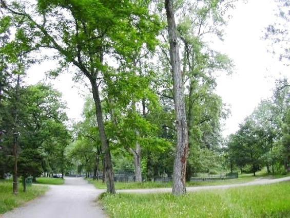 Alceda - Vista arbres Parc Balneari_01
