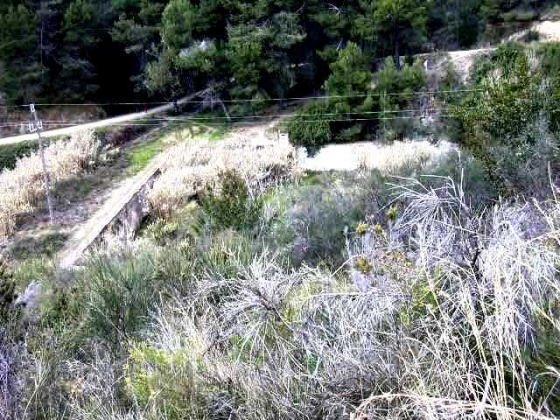 Vista general de la Bassa ple de Vegetació_01