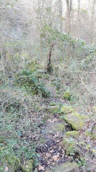 Camí casi borrat per la vegetació