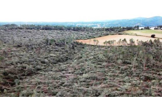 Milers de pins, abatuts per el fort vent, tot un bosc arrassat, el Bosc de Can Deu a Sabadell