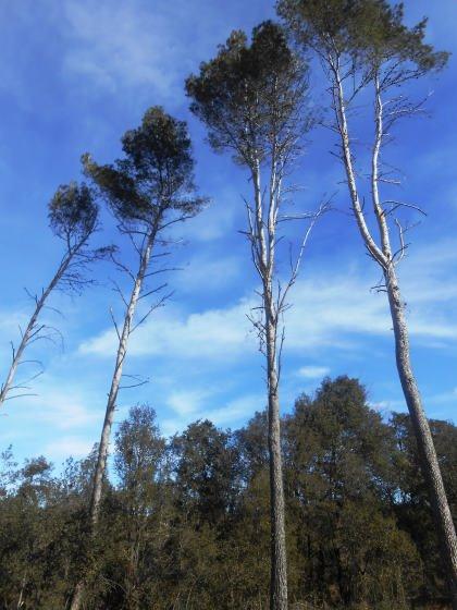 Esperem que els nostres fills o nets puguin veure el bosc tal com era fa uns anys en rere ?