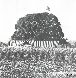 Any 1918