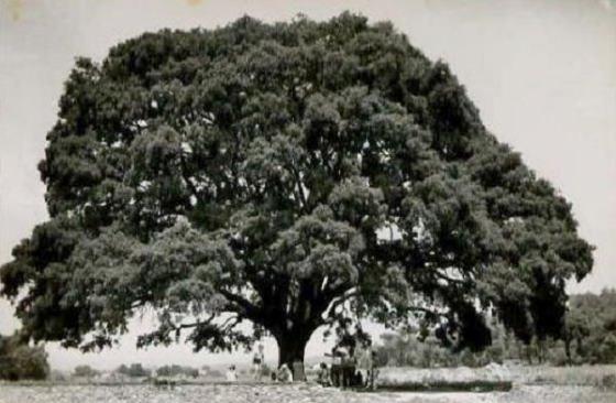Any 1955