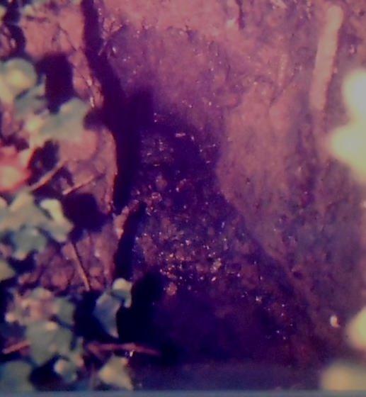 Fomt de les Bobines ( amb aigua) - any 1986 - Arxiu Rasola