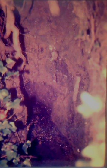 Fomt de les Bobines - any 1986 - Arxiu Rasola