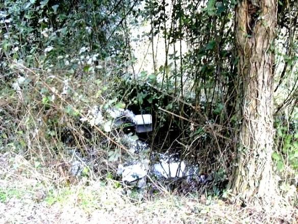La bassa abans de la seva neteja