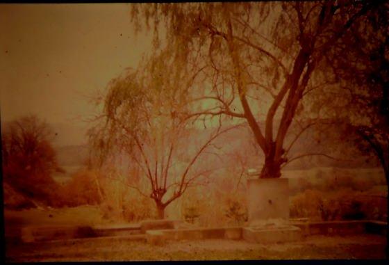 Any 1989 - Arxiu Rasola