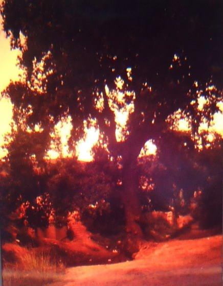 El lloc era presidit per un arbre centenari i al fons podem intuir la Font del Pop - Any 1989 - Arxiu Rasola