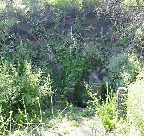 ft-mora-inc-forestal